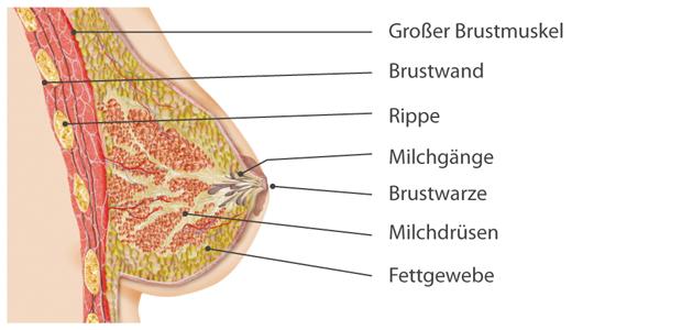 In welchem Land es am besten ist, die Erhöhung der Brust zu machen