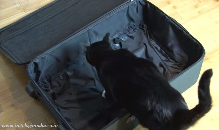 don't put black cat in the bag to keep it light