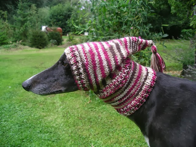 Greyhound/Galgo Pixie Hats