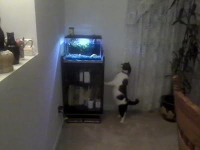 Neko random random photos cranes movies cats and fish for Cat proof fish tank