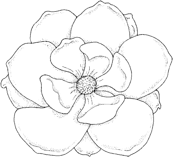 Adult Coloring Book Pages Tropical Flowers