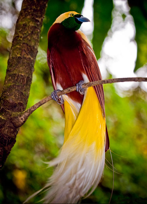NATURAL BEAUTY: Rare Birds Pictures May Flowers Tumblr