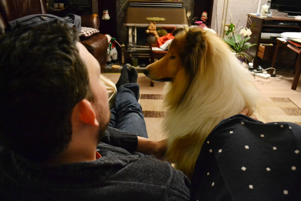 rough collie dog christmas