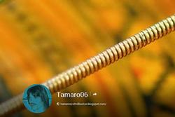 Google+ Seite zum Kanal ''Tamaros Röhre''...