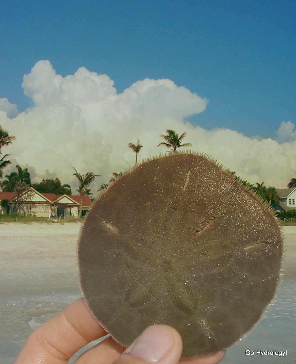 Go Hydrology!: Sand dollar with the starfish tattoo