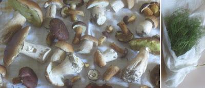 Steinpilze und andere Röhrenpilze; Bärwurz