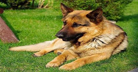 لماذا نهانا الرسول صلى الله عليه و سلم عن لمس الكلاب