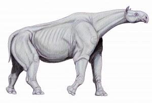 perissodactyla gigante Indricotherium