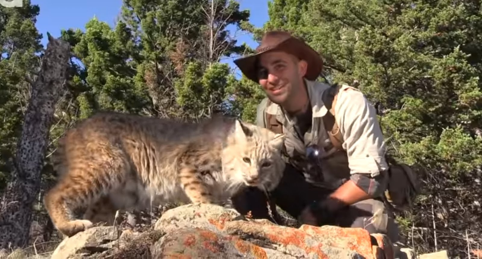 Coyode Pederson and Bob the Bobcat welcome you to blog