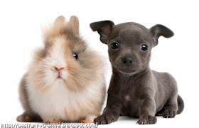 Fluffy bunny and puppy.