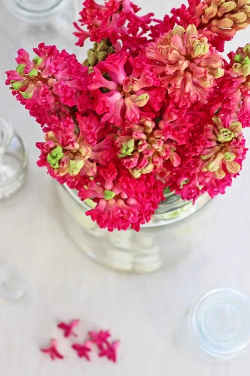 Hot Pink Hyacinths