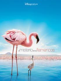 descargar El Misterio de los Flamencos, El Misterio de los Flamencos latino