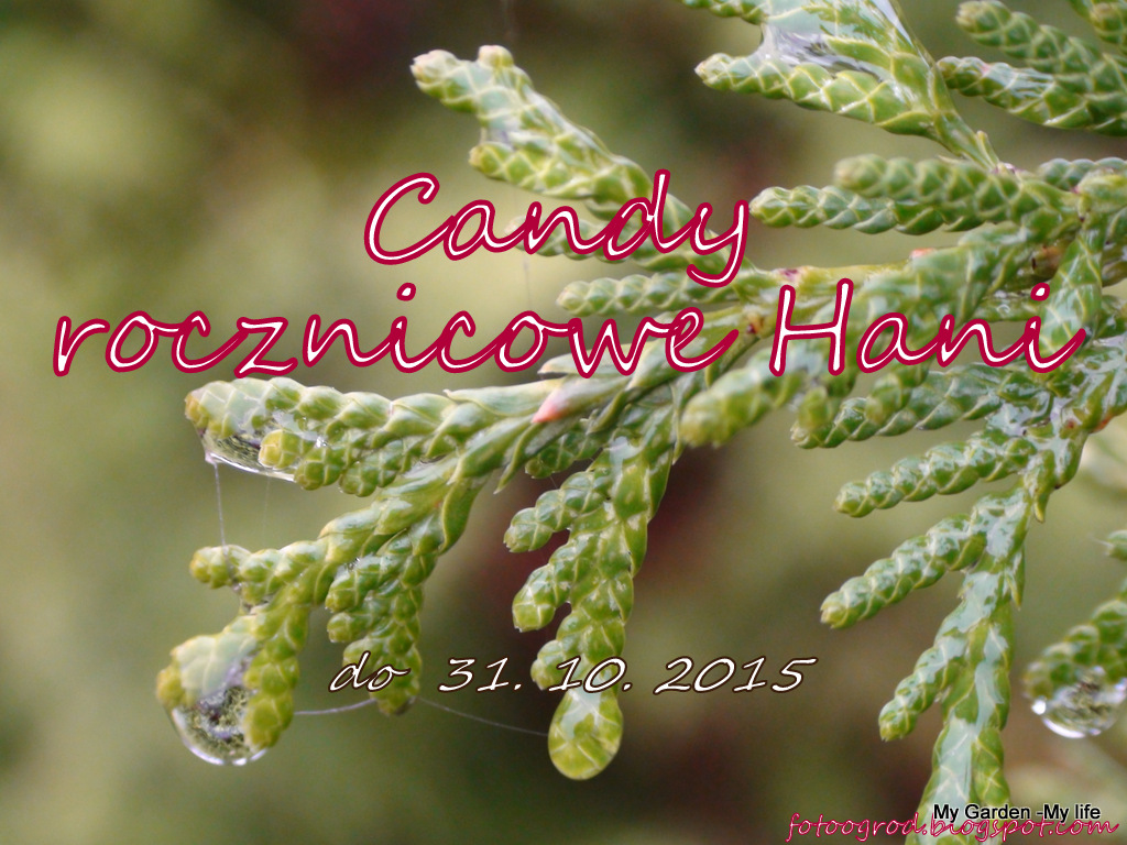Candy u Hani