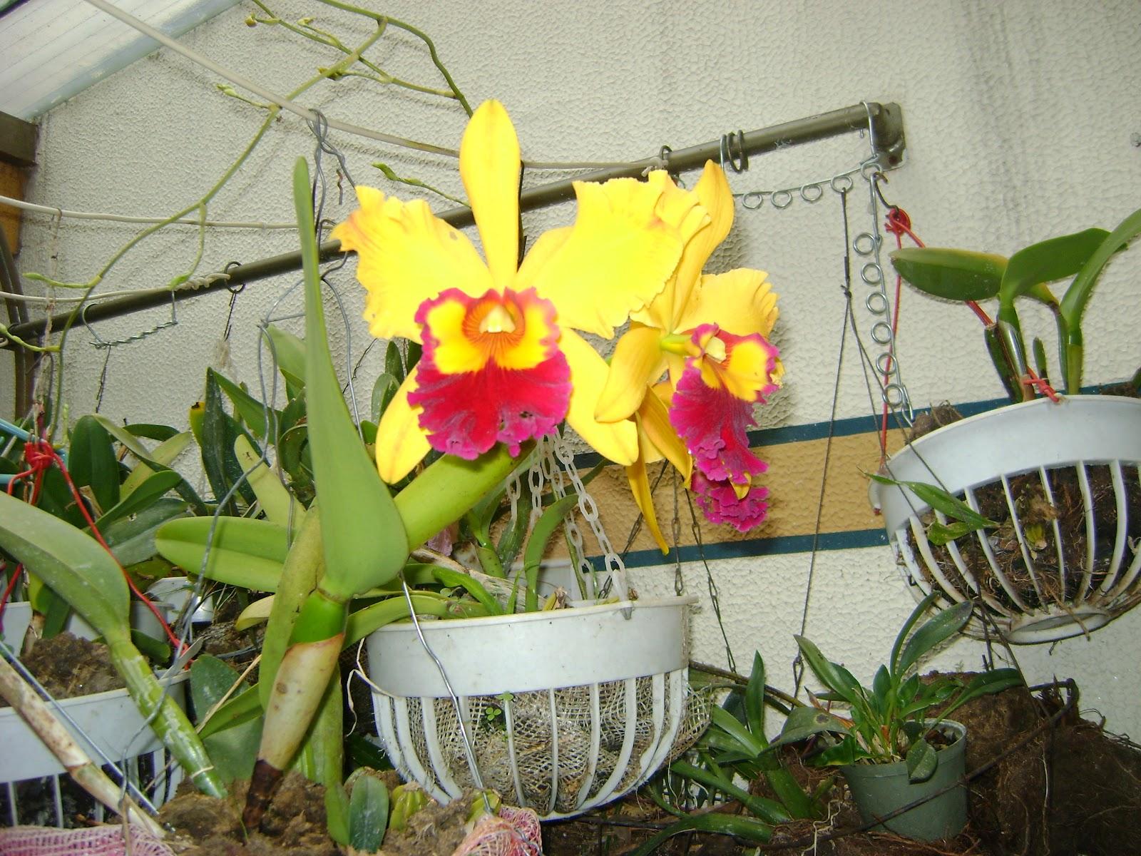 orquideas de mi tierra precios y fotos reales