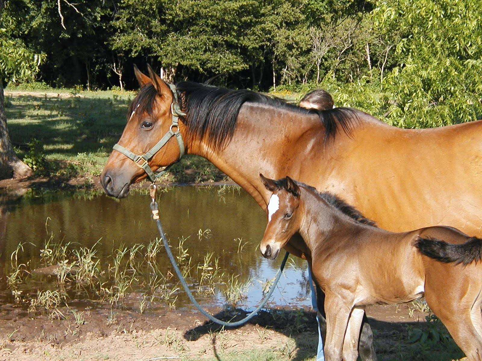 Solar and her foal; a filly 2001