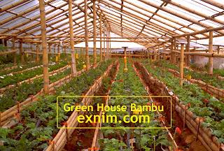Gambar Green House Bambu