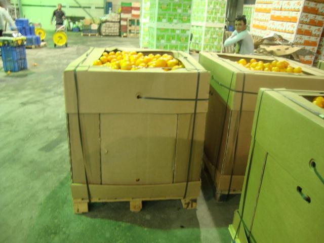 oranges_suppliers