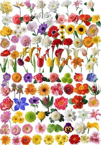 Las flores tipos de flores - Clase de flores y sus nombres ...