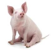 Bacon, o Porco: Mascote Rosado do Blog