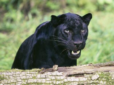 Animales tiernos, salvajes y a la vez divertidos III