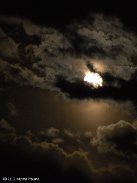 The Flower Moon's seraphic dance with the clouds of the night sky.