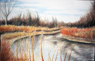 swamp, wetlands, nature preserve, park, walk , streams