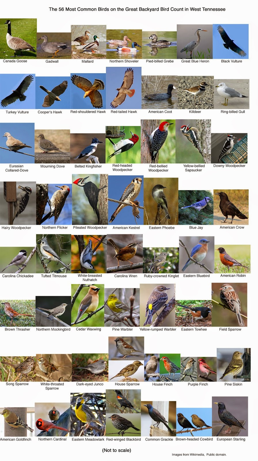 notes from soggy bottom great backyard bird count middle and