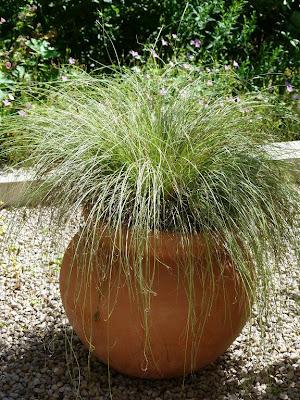 Les pins noirs vivaces ou succulentes en pots ou comment for Plante terrasse hiver