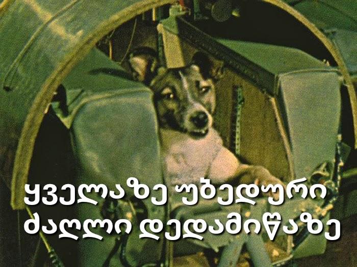 ლაიკა - ყველაზე უბედური ძაღლი დედამიწაზე