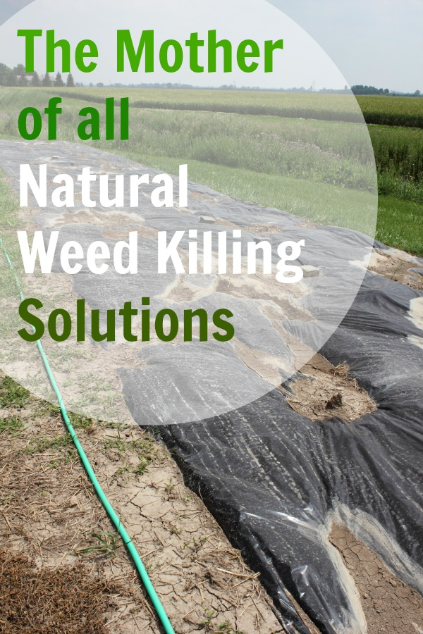 natural weed killing solution from the creek line house