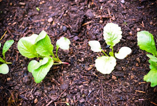 Садово-огородная магия: заговоры и советы для вашего урожая (чсть 1)