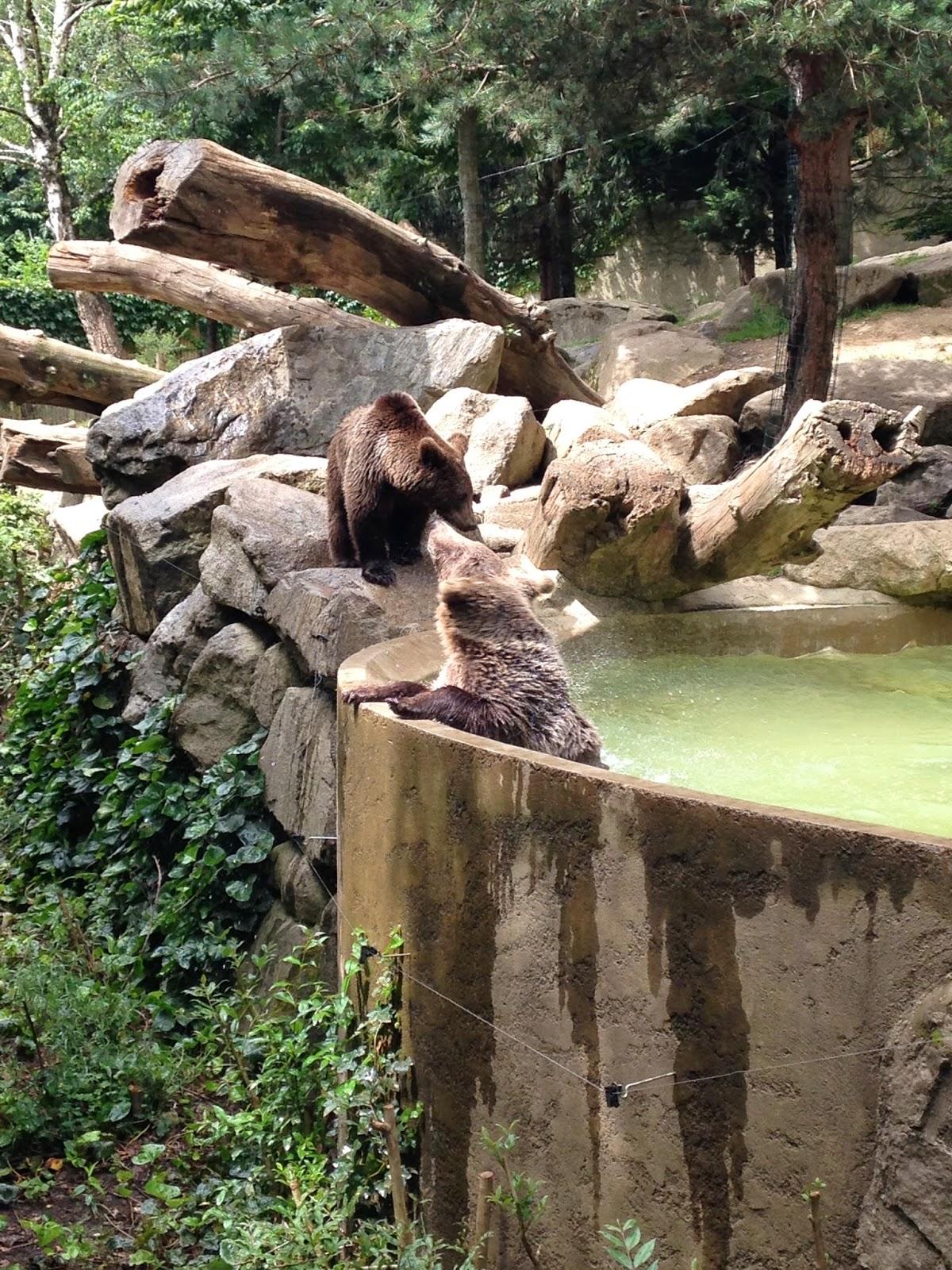 Osos en el Parque de los animales Pirenáicos