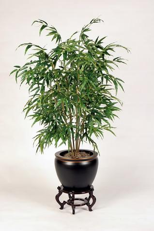 Bamboo Lamp Photo: Bamboo House Plants