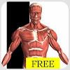 Pelajari Tubuh Dengan Visual Anatomy Free