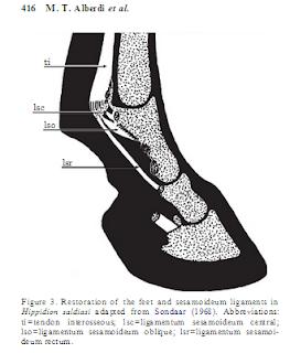 hippidion hoof