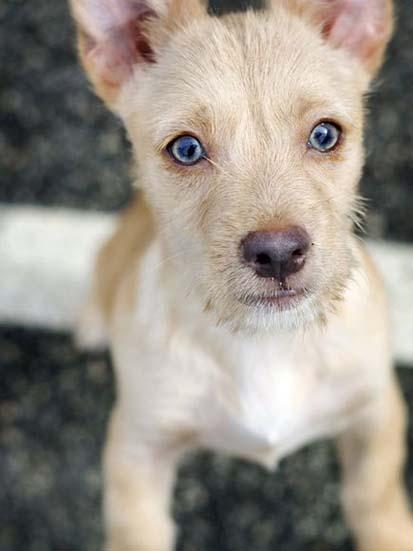 foto anak anjing gambar anak anjing close up gambar anak