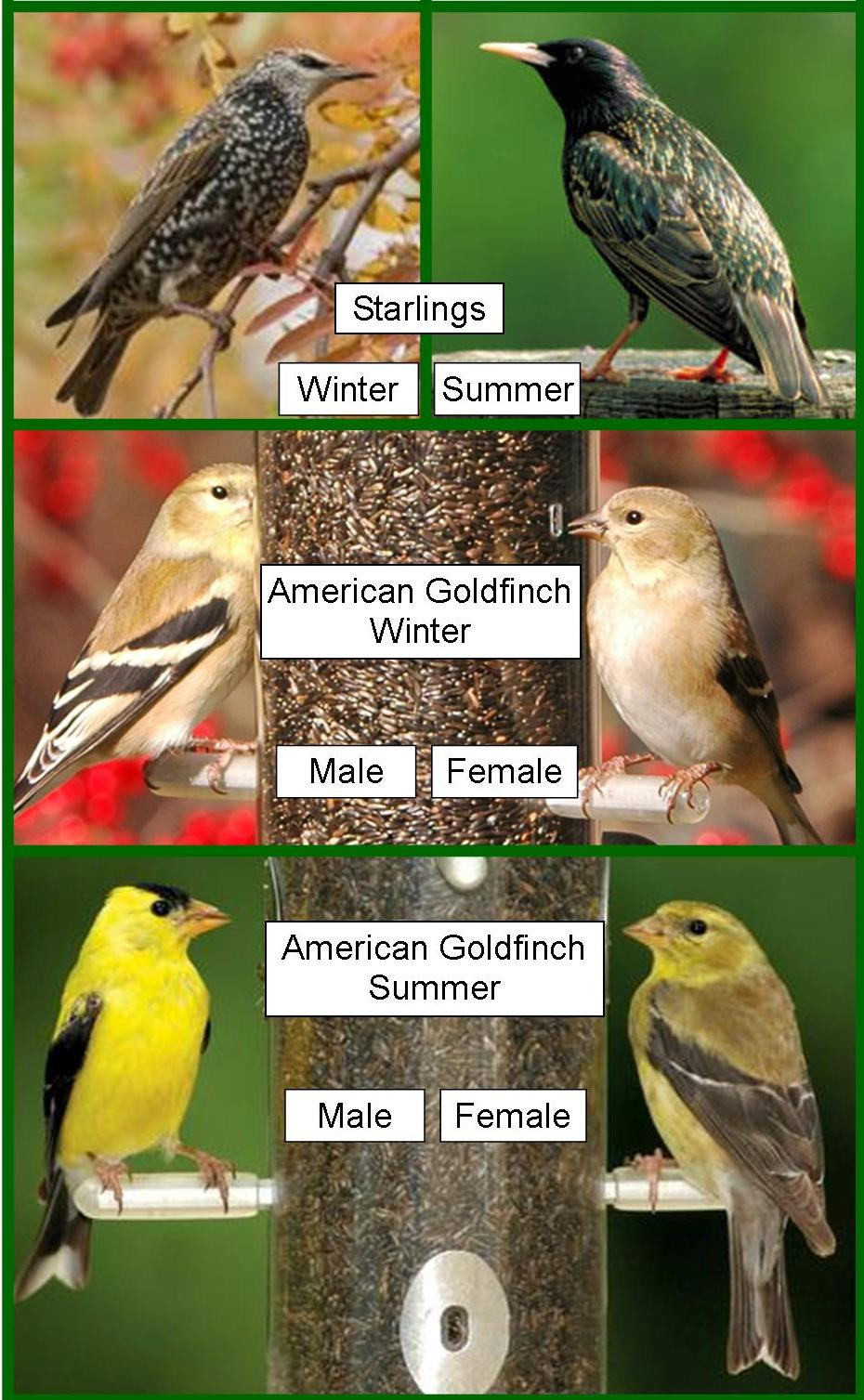 wild birds unlimited identifying brown birds do birds change