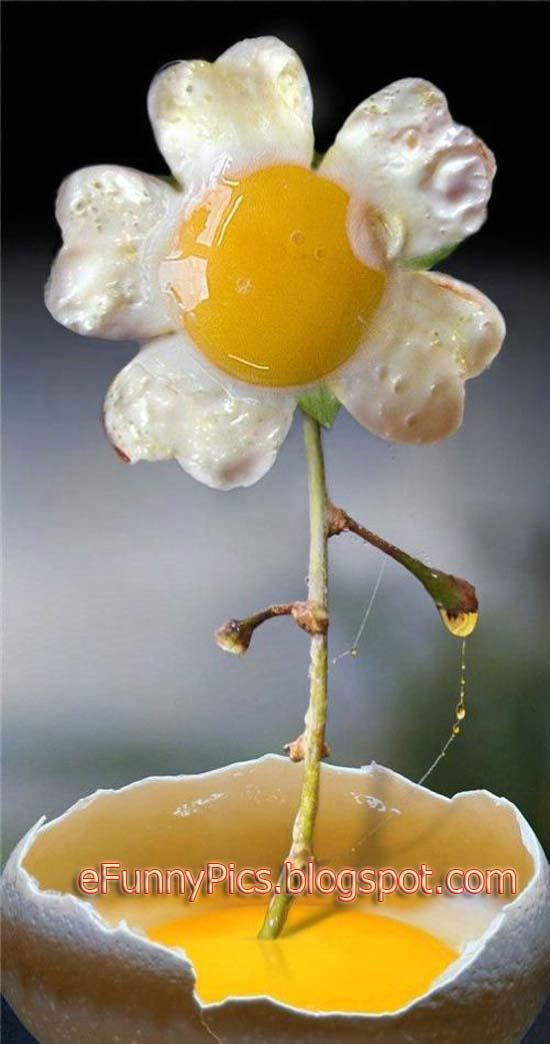 Egg-Shaped Flower