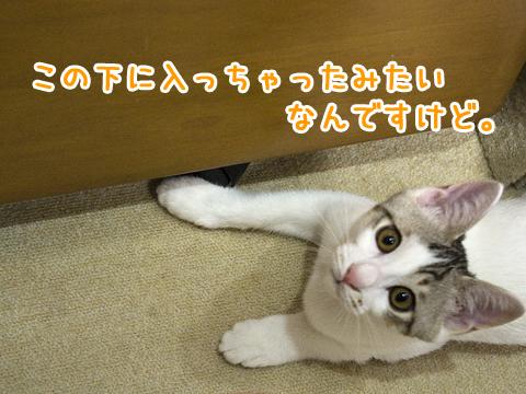 嘘をつく子猫