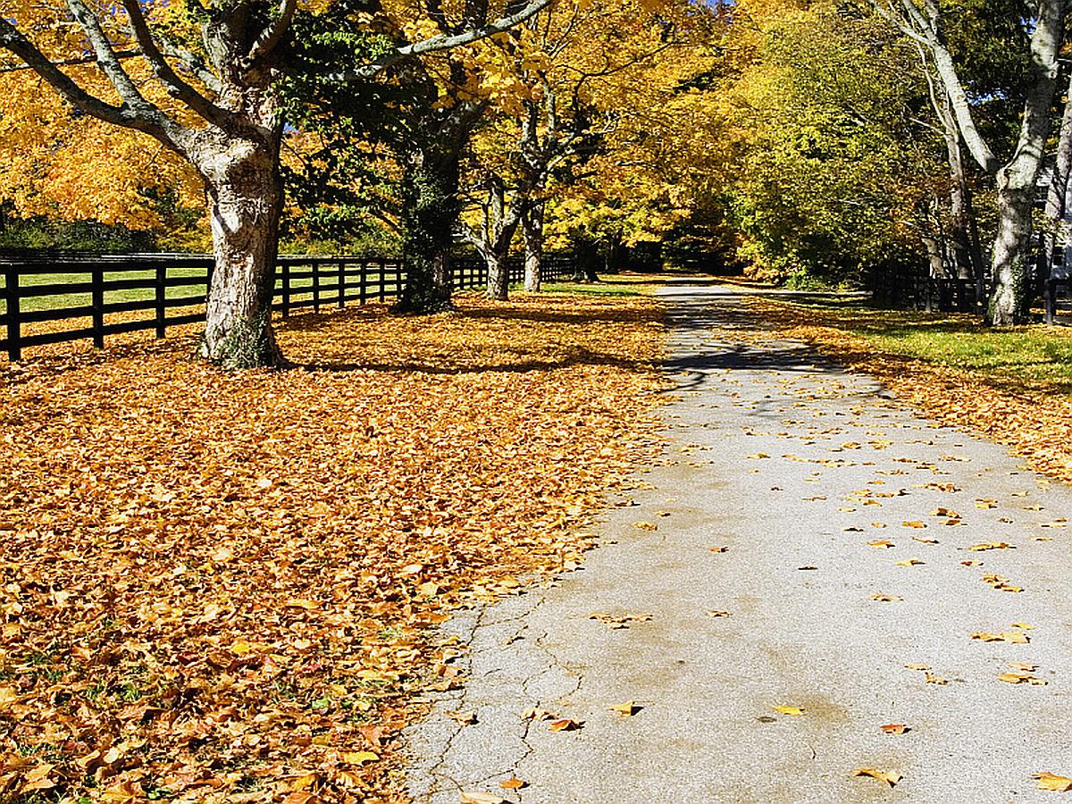 autumn desktop background wallpaper - autumn season