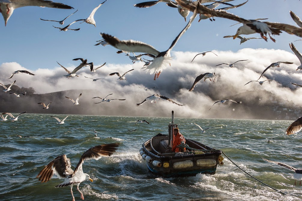 fotografia de Abner Kingman de embarcación panga y gaviotas