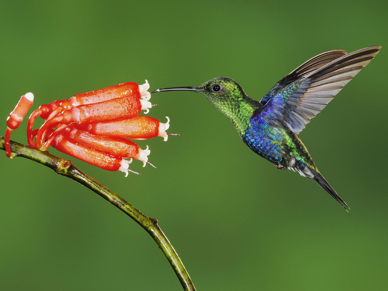 http://4.bp.blogspot.com/-HwSDI10vt1k/TgV5Mf9fQLI/AAAAAAAAUzc/2lDS26QT6wU/s1600/beautiful-hummingbird-wallpaper.jpg