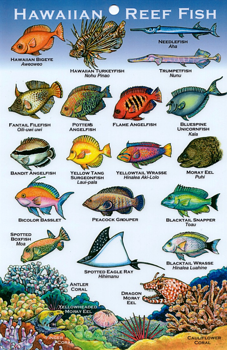 hawaiian fish names aloha joe in hawaii a visual guide