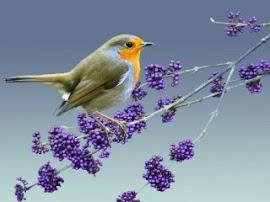 Os meus cantos são de saudade voo de liberdade motivo de alegria , levo a vida com tranquilidade