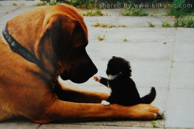 http://4.bp.blogspot.com/-Hx8etS2qydM/TXhNiQuka1I/AAAAAAAAQio/qm7MOMxBKuM/s1600/these_funny_animals_635_640_01.jpg