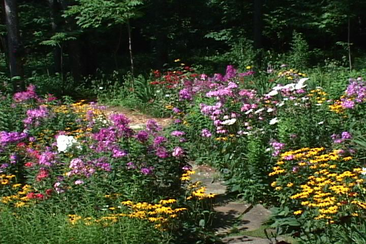 My sorta country life for Wildflower garden designs