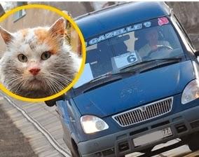 Бродячему коту купили билет на маршрутку