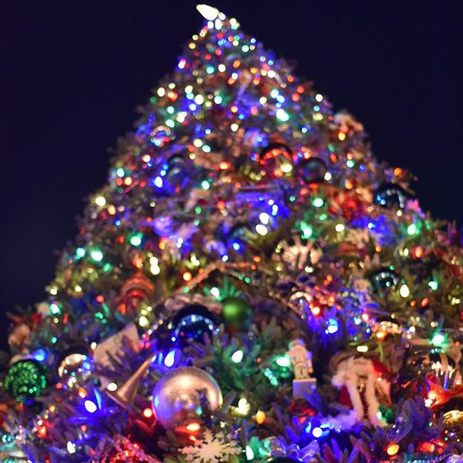 Christmas tree Disneyland