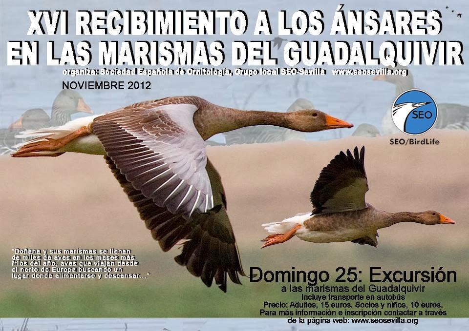 Aves Sevilla