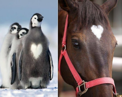 Penguins and horse with heart